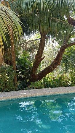 Маль-Паис, Коста-Рика: 20180309_141209_large.jpg
