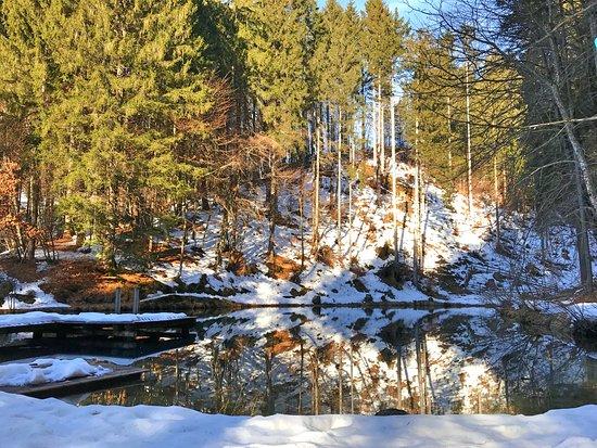Dellach, Avusturya: Naturteich im Winter