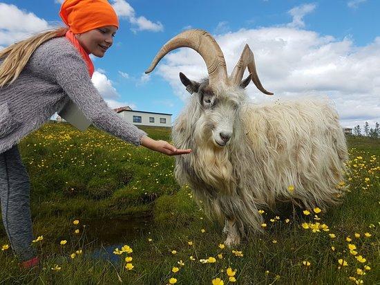 Selfoss, IJsland: This is Flóki