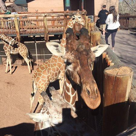 Cheyenne Mountain Zoo: photo1.jpg