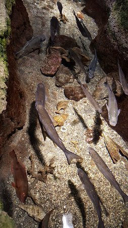 Porto Moniz, البرتغال: kolejne już małe akwarium