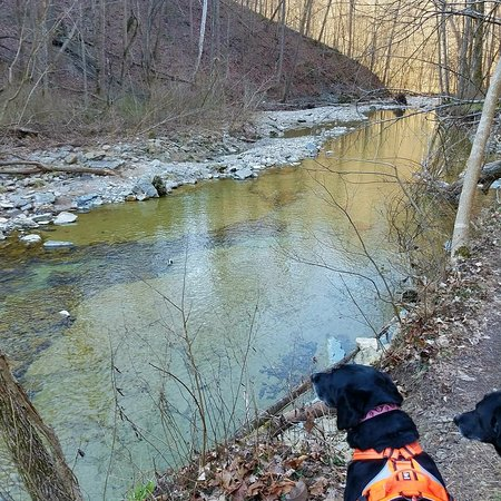 Clifty Falls State Park: IMG_20180312_211941_810_large.jpg