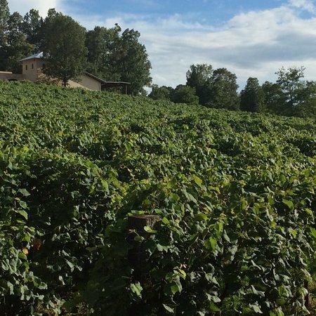 Calera, AL: Ozan Vineyard Mid-Summer