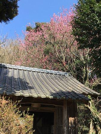 Gokoku Shrine照片