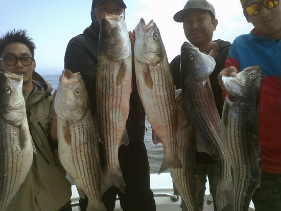 Port Jefferson, Нью-Йорк: 20 Stripers caught this day