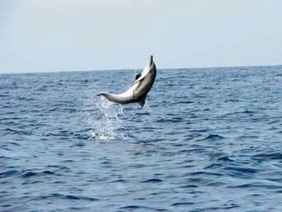 Lovina Beach, Indonesia: Come to see the amzing action dolphins in lovina