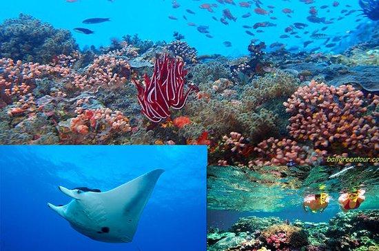 Snorkeling en Nusa Lembongan