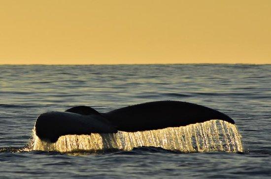Crociera al tramonto delle balene a