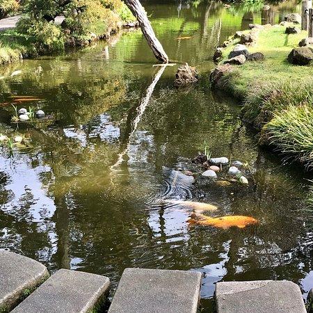 Japanese Tea Garden : photo3.jpg