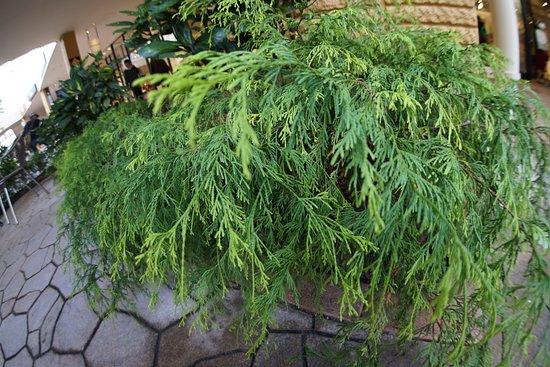 Aeon Lake Town : 植物です