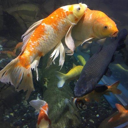 Shanghai Ocean Aquarium: photo7.jpg
