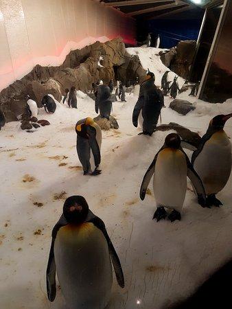 SEA LIFE Melbourne Aquarium: 20180305_121250_large.jpg