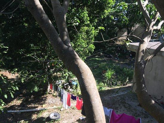 El Jardin de Frida: vu sur le jardin
