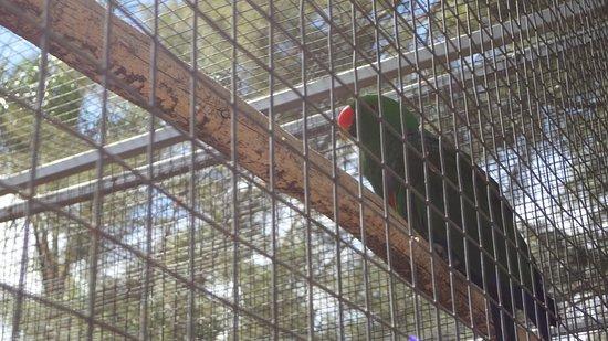 Robertson, Zuid-Afrika: Birds Paradise