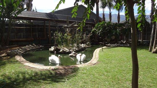 Robertson, Νότια Αφρική: Birds Paradise