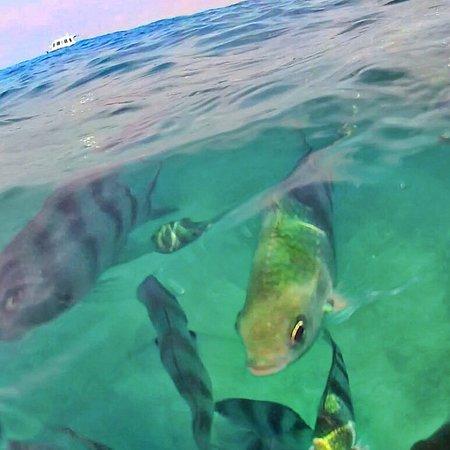 Minang Cove Resort: photo0.jpg
