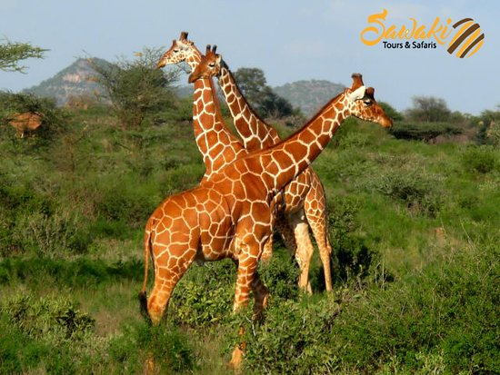 Sawaki Tours and Safaris