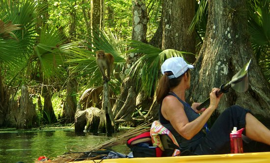 Silver Springs, FL: Kayak with wild monkeys!