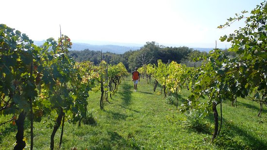 Petroio, Italy: our boutique vineyard
