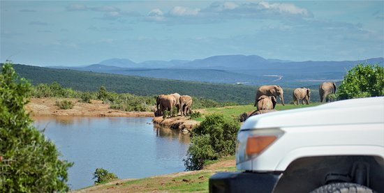 Game drive to Addo Elephant National Park