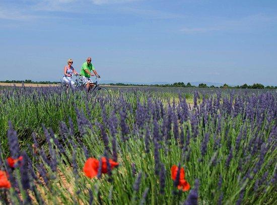 Volonne, فرنسا: Les champs de lavande de la Provence