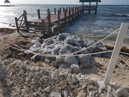 Puerto Yucalpeten, México: 20180311_085227_large.jpg