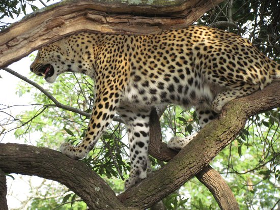 Waterbuck Game Lodge: Spotted the Leopard!!