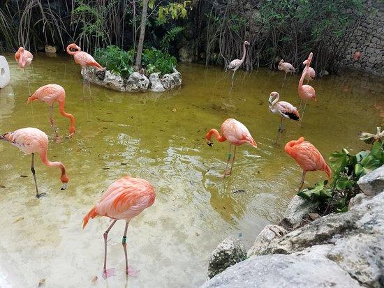 Rosa Tours La Aventura esta Aqui - Day Tours: Flamingos