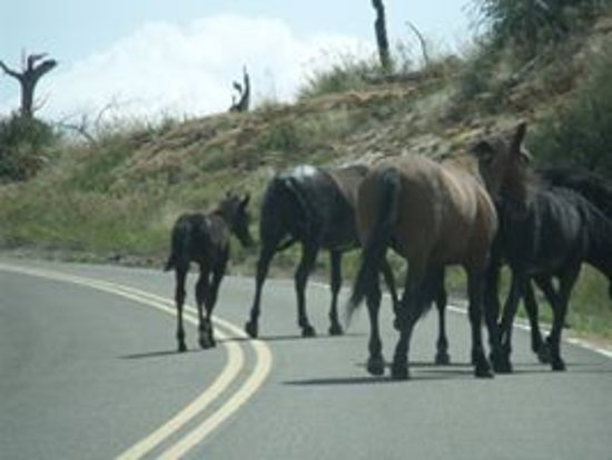Mesa Verde National Park, Κολοράντο: Be careful driving around the curves!  You never know when a herd of wild horses will be crossin