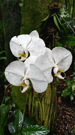 Papaikou, Hawái: orchids