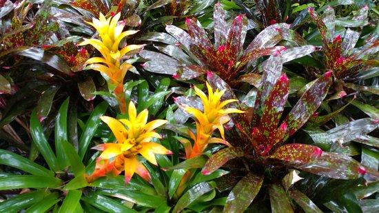 Papaikou, Havaí: flower?