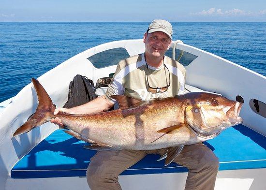 Fish Drake Bay - Reel Escape : Amberjack