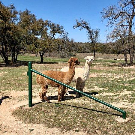 Wildflower Ridge Alpaca Ranch