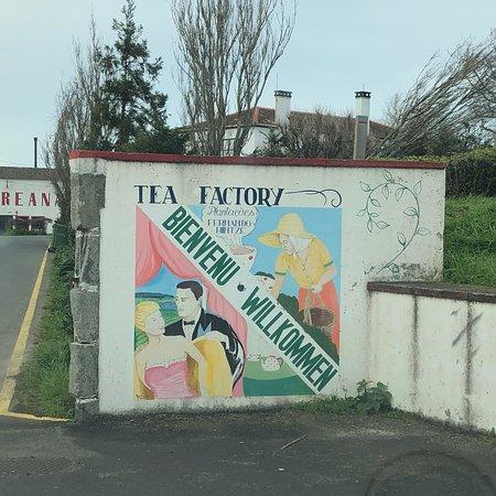 Gorreana Tea Plantation: photo1.jpg