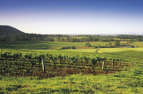 Hunter Valley Food and Wine Tasting