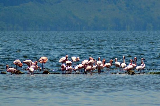 DAY TOUR TO LAKE NAKURU NATIONALPARK ...