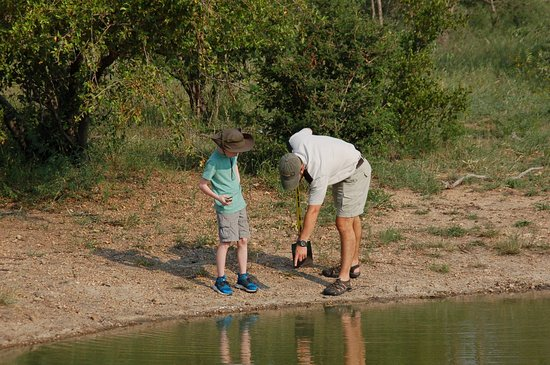 Kambaku Safari Lodge: Our son learning about animal tracks at the watering hole. He loved the experience.
