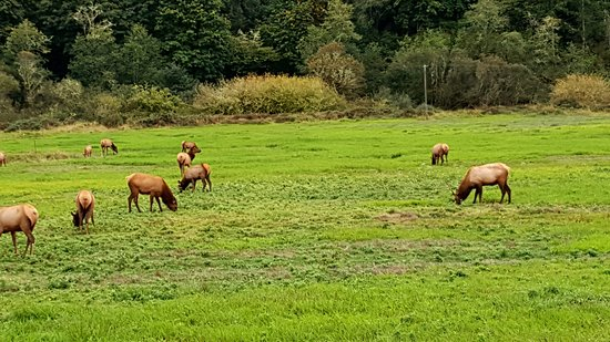 Winchester Bay, Oregón: ELK viewing area within 15 mins