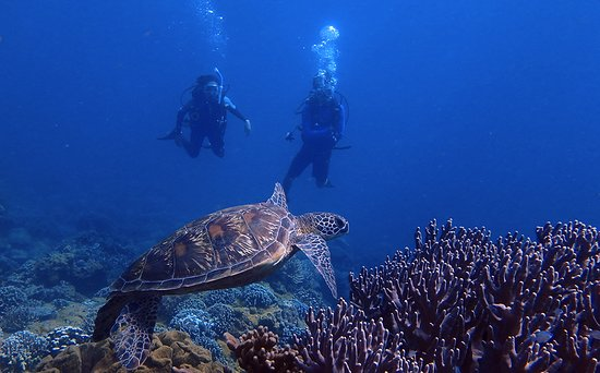 Piti, Mariana Islands: You never know when you will come across a Green Sea Turtle!