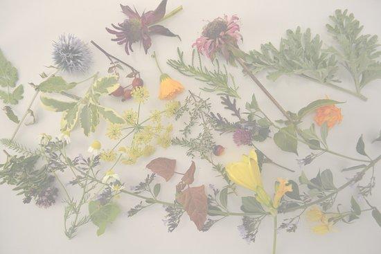 Kräuterhotel Edelweiss: Kräuterimpressionen aus unseren Kräuter-und Entspannungsgärten