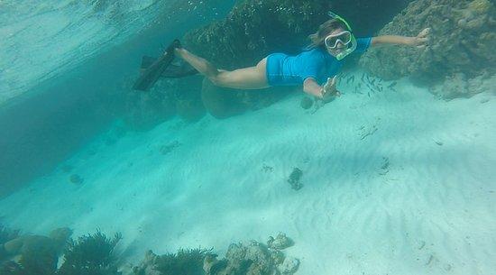 Posada Piano y Papaya Los Roques: Snorkel