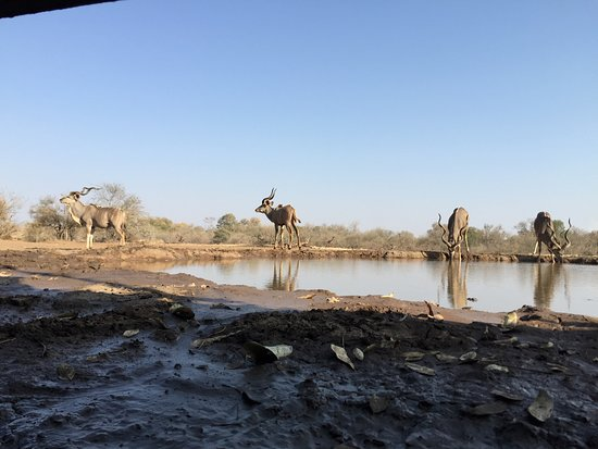 Mashatu Game Reserve, Botsuana: Matebole Elephant Hide at Mashatu