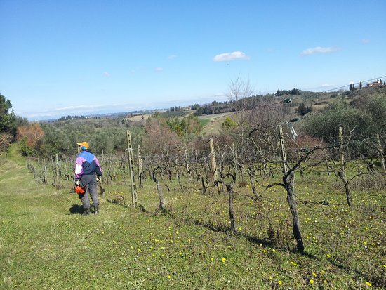 Peccioli, Italien: Our vineyard in February and Lorenzo working in it