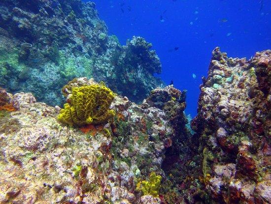 Windwardside, Saba: Diving Saba