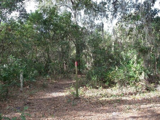 Riverview, FL: Trail with marker post