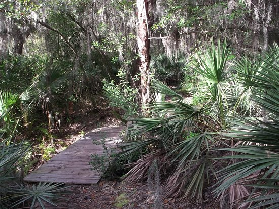 Riverview, FL: Bridge over creek