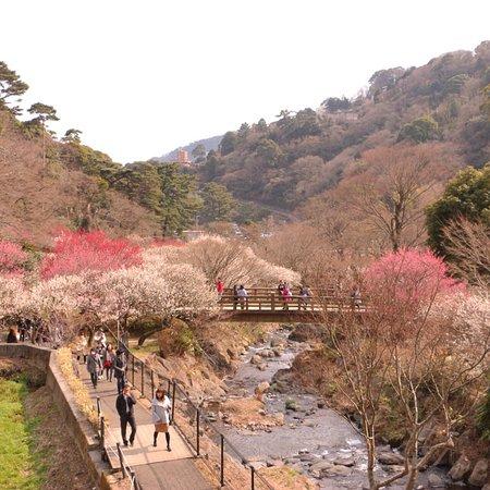 热海梅花园