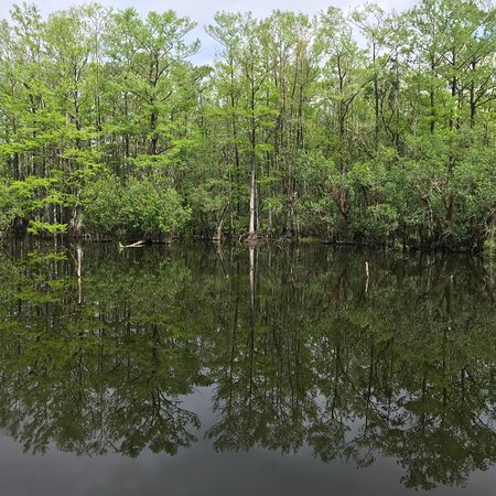 Six Mile Cypress Slough Preserve: photo2.jpg