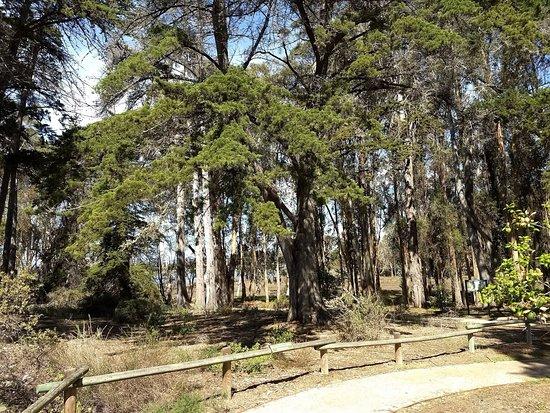 Los Osos, Kaliforniya: Nature Preserve pathway