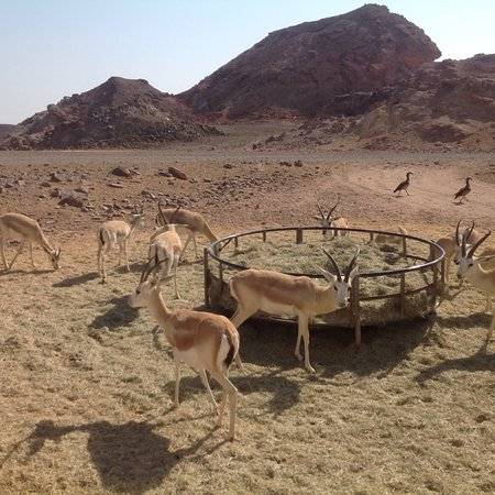 Sir Bani Yas Island, United Arab Emirates: photo4.jpg